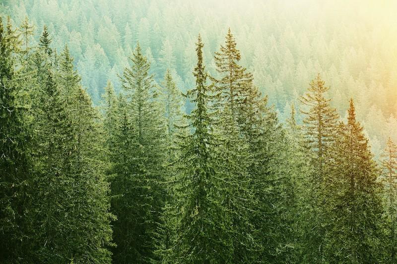 media/image/decorservice_forest.jpg